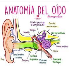 Brain Anatomy, Medical Anatomy, Anatomy And Physiology, Medicine Notes, Medicine Student, Studying Medicine, Nursing School Notes, Nursing Books, Medical Information
