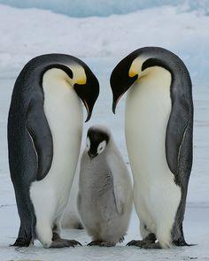 """""""Now, Listen to Mom & Dad"""" - DSC4558 - 1"""