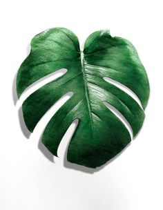 MONSTERA LEAF Art Print by NORDIK