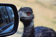 Caution! Objects in the Mirror are closer than they appear!