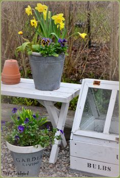 Springflowers, mini-greenhouse