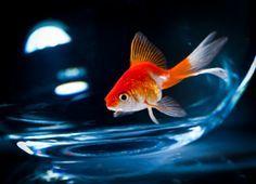 Das sind die schönsten Süßwasserfische für Dein Aquarium...