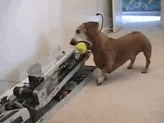 Fetch machine