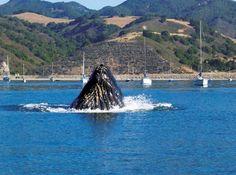 Whale in Avila