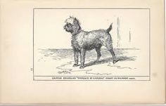 Image result for vintage photos of brussels griffons