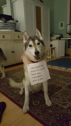Funny Memes Hall Of Shame - Animal Version (28+ Pictures)