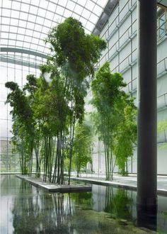 竹子在景观中的应用【35案例】