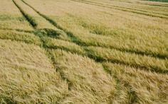 Brown Grass Wallpaper 4K