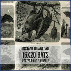 INSTANT DOWNLOAD Spooky Halloween Bats 16x20 DIY Printable