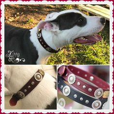 Luna loves her collar! https://www.kippyandco.com/collections/leather-collars/products/leather-dog-collar-with-antique-silver-floral-concho