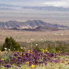 Longshot de Death Valley