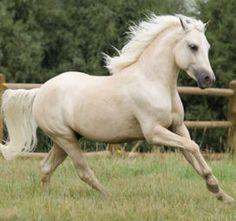 You could be a Gypsy Vanner, Arabian, Oldenburg, Shetland, Welsh or Friesian horse.