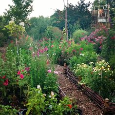 Our garden in July last year. I can't wait to start planting up our borders for this year. (I will start planting out seedlings and Dahlias in mid May after the chances of frosts are over.) If everything goes according to plan we will have even more flowers this year! Have a great week!