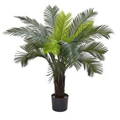 Standing at 3 feet tall, this beautiful Cycas tree will draw positive attention to itself for a variety of reasons. The 15 leaves of foliage are incredibly robust, comparable to a fountain like cascade of greenery. This tree is also UV resistant, protecting it from the sun, and making it perfect for both indoor and outdoor usage. Ideal for home or office, it also makes a fine gift.