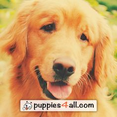 Learn more about your dog here: http://puppies4all.com/ #dog #cute #puppy