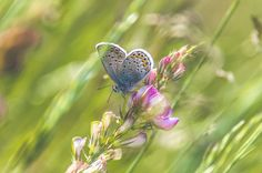 Butterfly on the flower ( showing me the beauty in the dreamy field of magic spring )