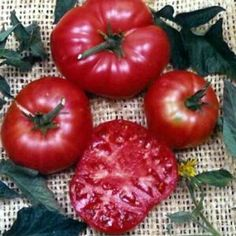 """Rose Brandywine Tomato 4 Plants - Deep Pink & Smooth by Hirts: Tomato Plants. $5.99. 8 oz. fruit. Wonderful flavor.. Non-potato leafed variety. Indeterminate, 90 days. Deep pink with a smooth texture. This is a """"Pre-Order"""". Shipping begins on March 1st! Disregard the initial shipping email if purchased before your shipping date. A tracking number will migrate to your account when the plants actually ship.. TOMATO: Tomatoes are rich in vitamins and antioxidants, a..."""