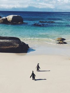 Boulder Beach is a fun place to stop if you want to see penguins on a beach! Near Cape Town, South Africa Places Around The World, Oh The Places You'll Go, Places To Travel, Places To Visit, Around The Worlds, Port Elizabeth, Silvester Trip, Magic Places, Boulder Beach
