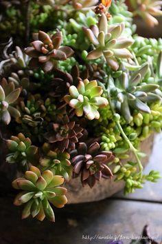 多肉植物の寄せ植え | フローラのガーデニング・園芸作業日記