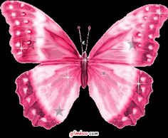 Mariposa Rosa / Pink Butterfly