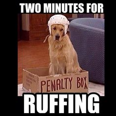 puppies & hockey, two of my favorites! Hockey Memes, Hockey Quotes, Funny Hockey, Animal Memes, Funny Animals, Cute Animals, Animal Humor, Funny Dogs, Cute Dogs