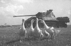 Knocked out panther with some friends. Obchak Village, Operation Bagration, 1944