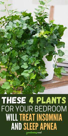 Best Indoor Plants, Indoor Garden, Garden Plants, Potted Plants, Container Plants, Container Gardening, Gardening Tips, Inside Plants, Bedroom Plants