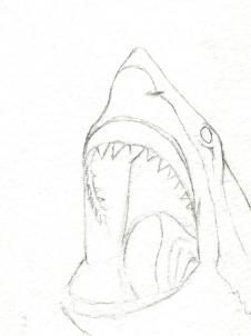 how to draw a shark head step 4