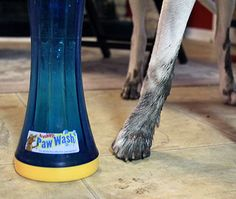 The Paw Wash - very cool invention for cleaning dog paws without a brush. Love it.