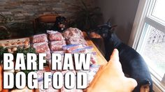 RAW #DogFood #Diet, BARF for #Dogs | Biologically Appropriate #RawFood!  Join us on #vlog pickup of RAW Dog Food for my Doberman and Miniature Pinscher from local farmer. BARF for Dogs is the best! Biologically Appropriate Raw Food - no processed shyt! ;) #vlogging #animals #health #dog #pets #rawdogfood #healthyeating #youtuber #youtube #vlogs