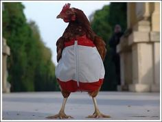 A chicken tracksuit