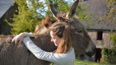 Free Image on Pixabay - Donkey, Colt, Girl, Young Woman Animal Species, Bird Species, Bactrian Camel, Adoption, Horse Photography, Horse Love, Animals Of The World, Show Horses, Horseback Riding
