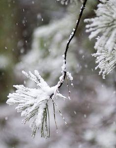 Falling Snow | Flickr - Photo Sharing!