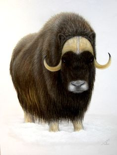Original Pastel Drawing Musk Ox in Snow The Porter Family // arm ink idea