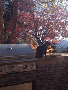 Even the family cat loves the Grill! Stone Masonry, Outdoor Kitchens, Cat Love, Fireplaces, Fireplace Set, Fire Places, Fire Pits, Mantles