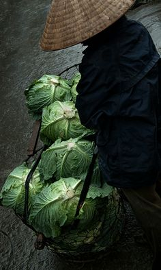 Farmer's cabbages . Ninh Binh, Vietnam