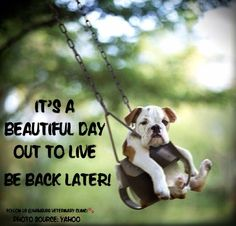 Beautiful day | Live | Embrace life | Take chances | Enjoy the day | 7 days a week | Animal humor | Cute dog | Great day: It's a BEAUTIFUL day out to LIVE. Be back later. Hope everyone is enjoying their day.