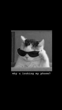 Funny Cat Wallpaper, Sassy Wallpaper, Cute Fall Wallpaper, Dark Wallpaper Iphone, Cartoon Wallpaper Iphone, Iphone Wallpaper Tumblr Aesthetic, Bear Wallpaper, Cute Cartoon Wallpapers, Aesthetic Wallpapers