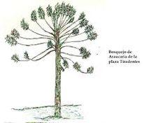 Image result for araucaria ilustracion