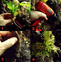 How To Plant Epiphytes In A Vivarium