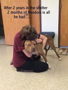 Sheltered dog tastes freedom for first time in 2 years, only to be returned