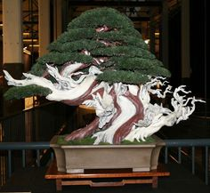 Another Absolutely Amazing Bonsai Tree.