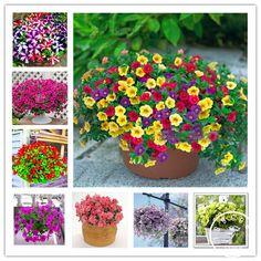 100 seeds / pack, Mix Garden Petunia Shuttlecock Flower Horn Bonsai Flower Seed,#QIF50E