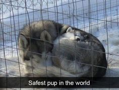 41 Funny Dogs That Beautify Your Day, . Funny Animal Memes, Cute Funny Animals, Dog Memes, Funny Animal Pictures, Cute Baby Animals, Funny Cute, Animals And Pets, Hilarious, Wild Animals