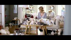 Diet Coke - Taylor Swift Kittens | TAYLOR SWIFT AND KITTENS TWO OF LIFE'S BEST THINGSSSSSSSSSS AHHHHHHHHHHHH