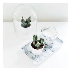 Marble & cactus home decor  www.noanoir.com
