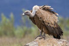 15 faits surprenants sur les animaux de la savane africaine qui pourraient bien…