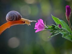 Escargot et fleur