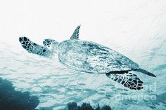 Marine photography of a swimming turtle by Andrew Bret Wallis