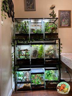 Gecko Habitat, Reptile Habitat, Reptile Room, Les Reptiles, Cute Reptiles, Amphibians, Gecko Terrarium, Terrarium Reptile, Animal Room